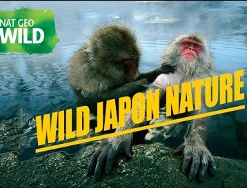 Wild Japan Full Documentary