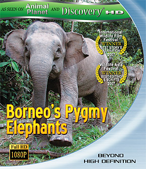 Borneo's Pygmy Elephants Full Documentary Scientific research indicated that pygmy elephants existed in Borneo for 300 thousand years.