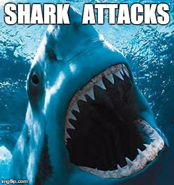 Shark Attacks - Naked science - the top predators of the sea, honed to an evolutionary perfection.